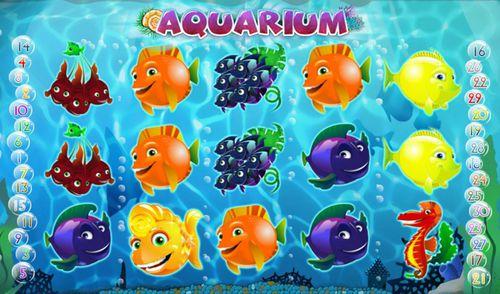 Aquarium slot