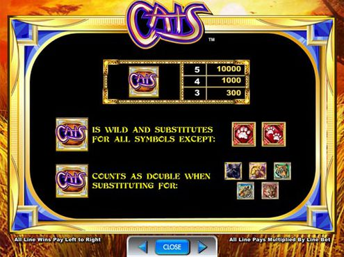 Cats free play